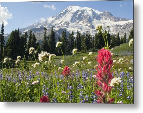 Attractions Metal Print featuring the photograph Wildflowers In Mount Rainier National by Dan Sherwood