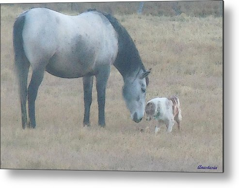 Metal Print featuring the photograph Will You Play With Me by Anastasia Savage Ealy
