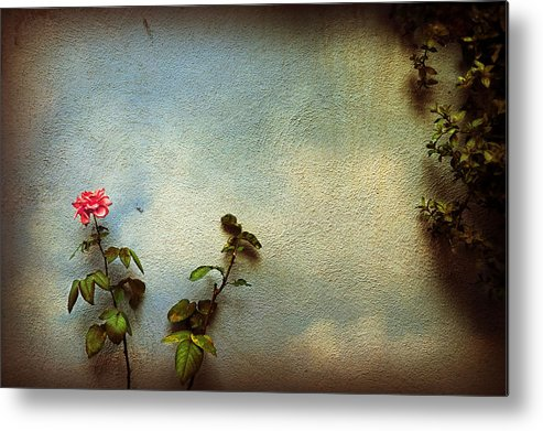 Rose Metal Print featuring the photograph Wilting Rose by Silvia Ganora