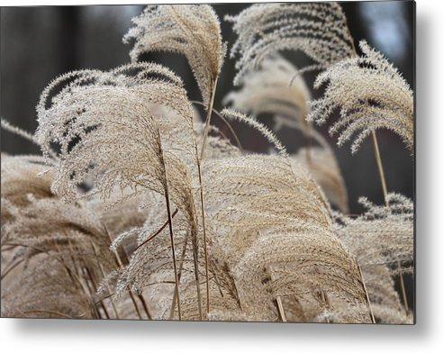 Garden Metal Print featuring the photograph Winter In The Garden #1 by Suzanne Thurman