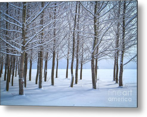 Idaho Metal Print featuring the photograph Winter Sentinels by Idaho Scenic Images Linda Lantzy