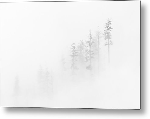 Winter Metal Print featuring the photograph Winter Veil by Mike Dawson