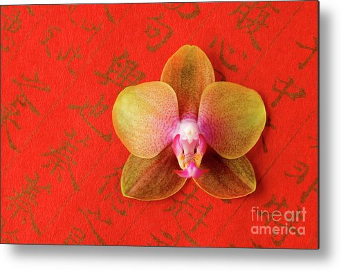 Orchid Metal Print featuring the photograph Wishes Come True by Julia Hiebaum