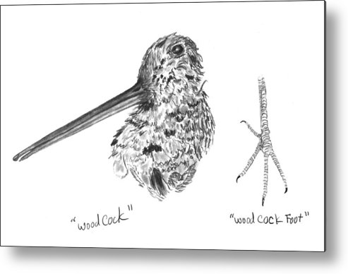 Iowa Metal Print featuring the drawing Woodcock With Foot by Kevin Callahan