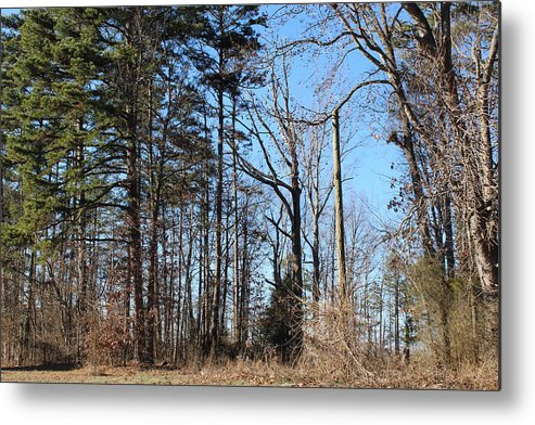 Woods Metal Print featuring the photograph Woods On The Side Yard by Ali Baucom
