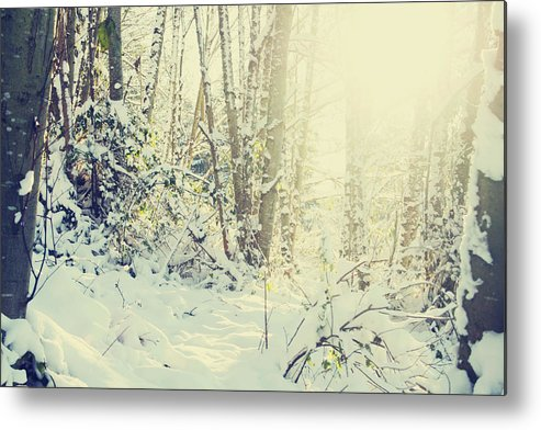 Snow Metal Print featuring the photograph Wunderkind by Kerry Langel