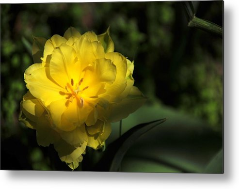 Metal Print featuring the photograph Yellow And Green No. 3 by Edward Dunncan