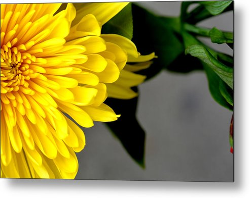 Yellow-chrysanthemum Metal Print featuring the photograph Yellow Chrysanthemum Flower by Reva Steenbergen
