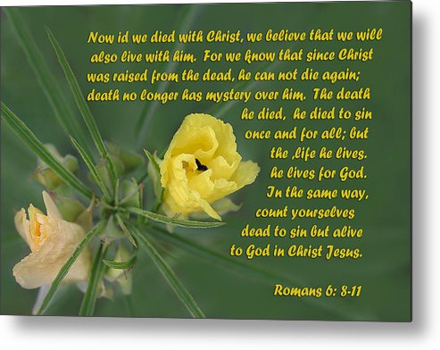 Scripture Metal Print featuring the photograph Yellow Wildflower - Romans by Linda Phelps