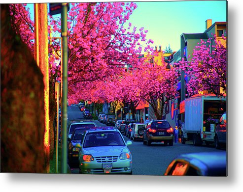 Yew Metal Print featuring the photograph Yew Street Spring by Paul Kloschinsky