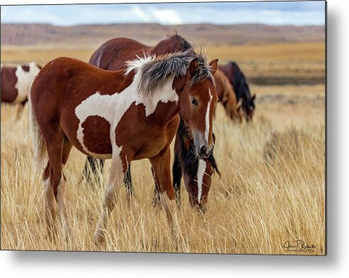 Wild Metal Print featuring the photograph Young And Shy by Clicking With Nature
