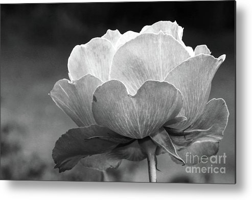 Rose Metal Print featuring the photograph Your Are Beautiful by Christiane Schulze Art And Photography