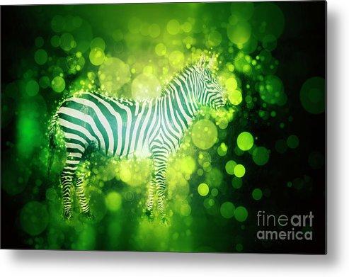 Plains Zebra Metal Print featuring the photograph Zebra Masai Mara, Kenya by Humorous Quotes