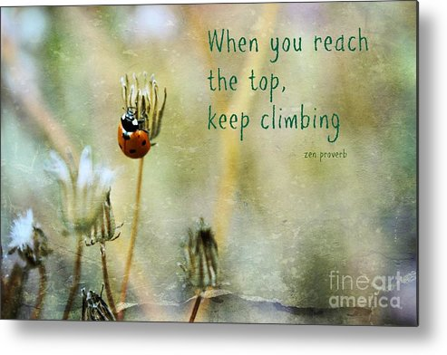 Lady Bug Metal Print featuring the photograph Zen Proverb by Clare Bevan