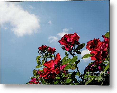 Nature Metal Print featuring the photograph Angled by Deborah Klubertanz