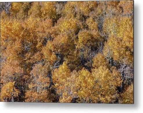 East Glacier Park Village Metal Print featuring the photograph Aspen Autumn Leaves by Todd Klassy