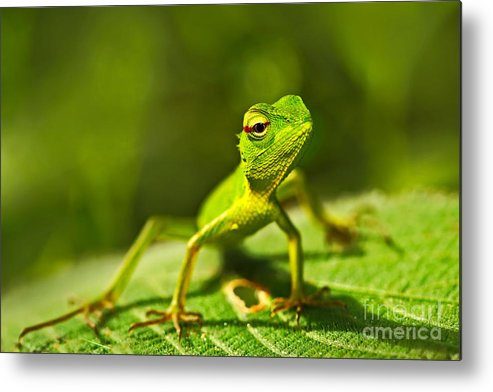 Small Metal Print featuring the photograph Beautiful Animal In The Nature Habitat by Ondrej Prosicky