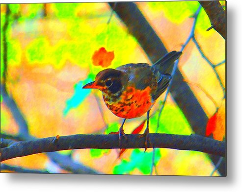 Brushed Robin Metal Print featuring the photograph Brushed Robin by Edward Swearingen