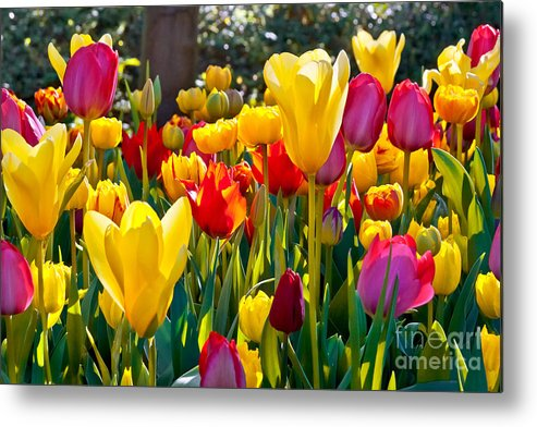 Pink Metal Print featuring the photograph Colorful Tulips In The Park. Spring by Artens