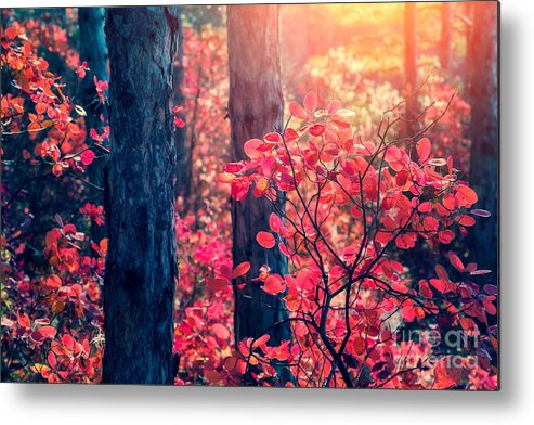 Magic Metal Print featuring the photograph Fantastic Forest With Cotinus by Creative Travel Projects