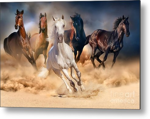 Equestrian Metal Print featuring the photograph Horse Herd Run In Desert Sand Storm by Callipso
