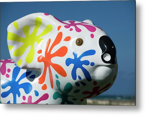 Photography Metal Print featuring the photograph Koala Sculpture On The Beach, Coral by Panoramic Images