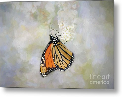 Texture Metal Print featuring the photograph Monarch Butterfly by Darren Fisher