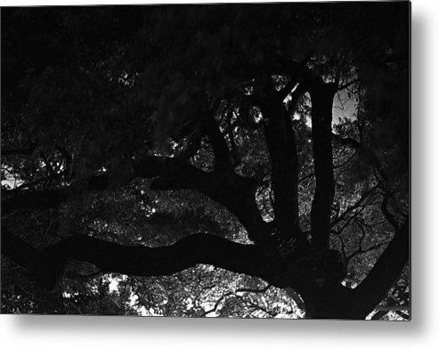 Oak Tree At Night Metal Print featuring the photograph Oak Tree At Night by Edward Swearingen
