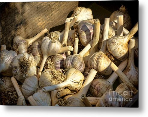 Garlic Metal Print featuring the photograph Organic Garlic by Olivier Le Queinec