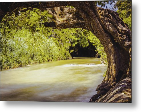 Jamaica Metal Print featuring the photograph River Banks In Trelawny Jamaica by Debbie Ann Powell