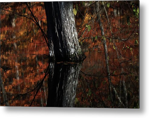 Tree Reflects Metal Print featuring the photograph Tree Reflects In The Pond by Karol Livote