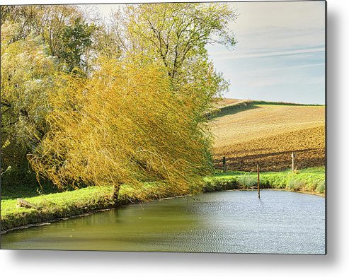 Wind Metal Print featuring the photograph Wind In The Willow by Michael Briley