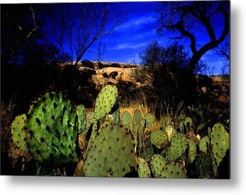 Landscapes Metal Print featuring the photograph Prickly Pears Enchanted Rock Texas by Tom Fant