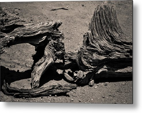 Branch Metal Print featuring the photograph Branch by AR Harrington Photography