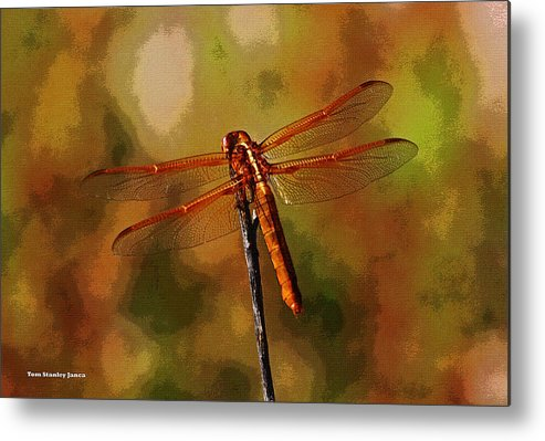 Orange Dragonfly Metal Print featuring the photograph Orange Dragonfly by Tom Janca