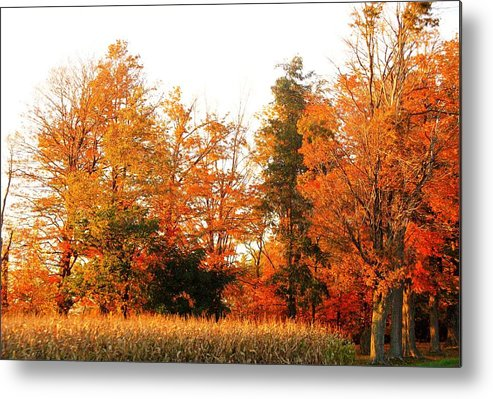 Trees Metal Print featuring the photograph Trees Of Fall by Rhonda Barrett