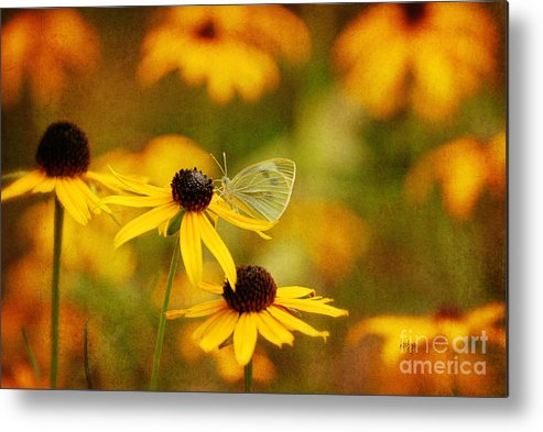 Butterfly Metal Print featuring the photograph Abundance by Lois Bryan
