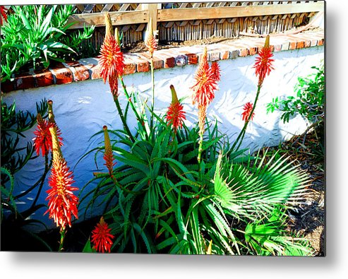 Aloe Metal Print featuring the photograph Aloe In Bloom by Robert Meyers-Lussier