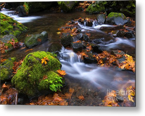 Starvation Creek Metal Print featuring the photograph Autumn Leaves Scattered by Mike Dawson