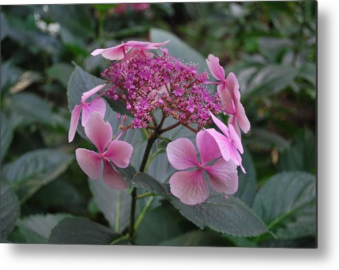 Flower Metal Print featuring the photograph Beautiful Pink Flowers by Richard Jenkins