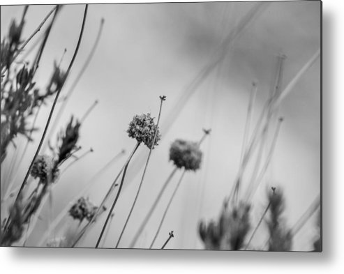Flowers Metal Print featuring the photograph Black And White Flowers by AR Harrington Photography