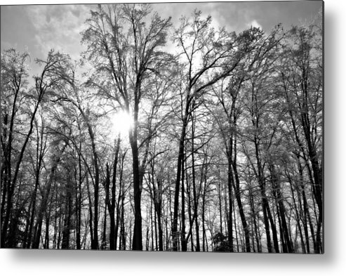 Snow Metal Print featuring the photograph Black And White Forest by Dawdy Imagery