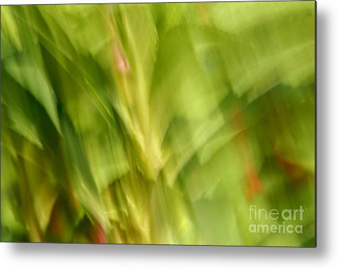 Blurred Motion Metal Print featuring the photograph Blowing In The Breeze by Paul W Faust - Impressions of Light