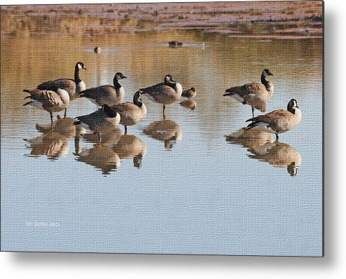 Canadian Geese Stop Over Metal Print featuring the photograph Canadian Geese Stop Over by Tom Janca