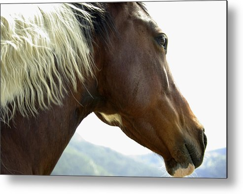 Light Metal Print featuring the photograph Close-up Of Brown Pinto Pony With White by Gail Schack