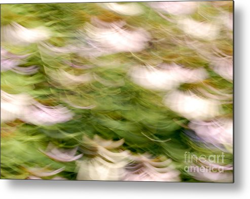 Blurred Motion Metal Print featuring the photograph Coneflowers In The Breeze by Paul W Faust - Impressions of Light