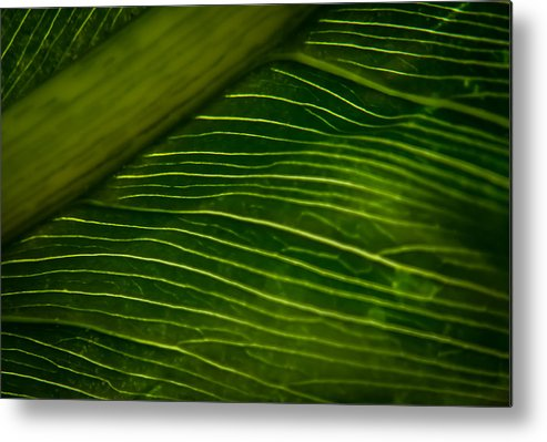Leaves Metal Print featuring the photograph Dramatic Leaf Abstract by Debbie Orlando