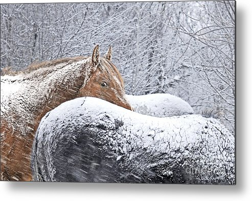 Horses Metal Print featuring the digital art Eye Of The Storm by Judy Wood