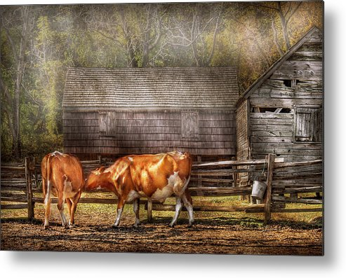 Savad Metal Print featuring the photograph Farm - Cow - A Couple Of Cows by Mike Savad