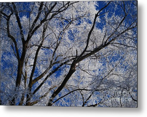 Tree Metal Print featuring the photograph Frost by Valerie Winebrenner